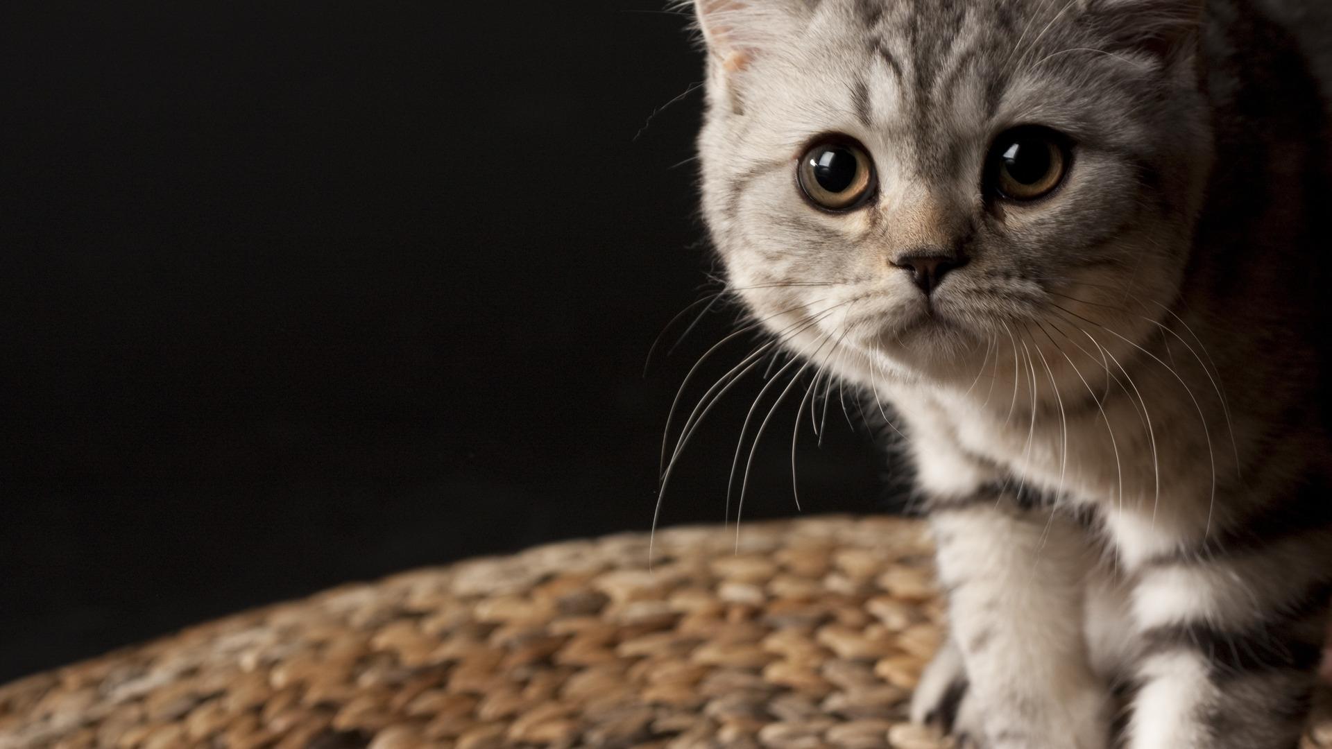 23845 скачать обои Животные, Кошки (Коты, Котики) - заставки и картинки бесплатно