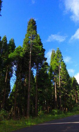 30075 скачать обои Пейзаж, Деревья, Дороги - заставки и картинки бесплатно