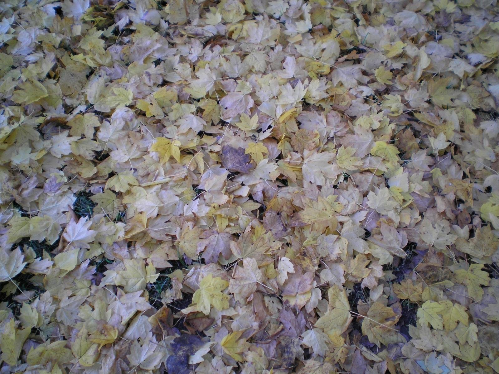 Скачать картинку Осень, Листья, Фон, Растения в телефон бесплатно.