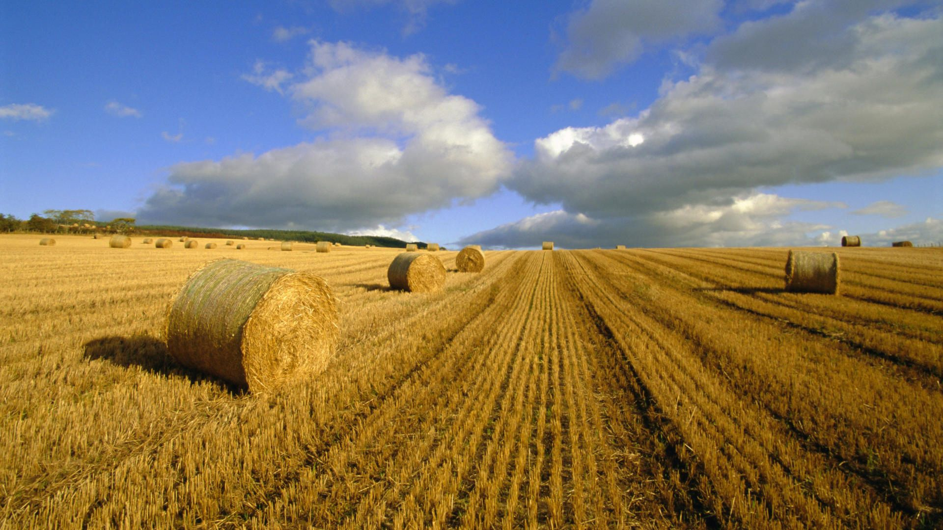 134591 Screensavers and Wallpapers Agriculture for phone. Download Nature, Summer, Hay, Agriculture, Bales pictures for free