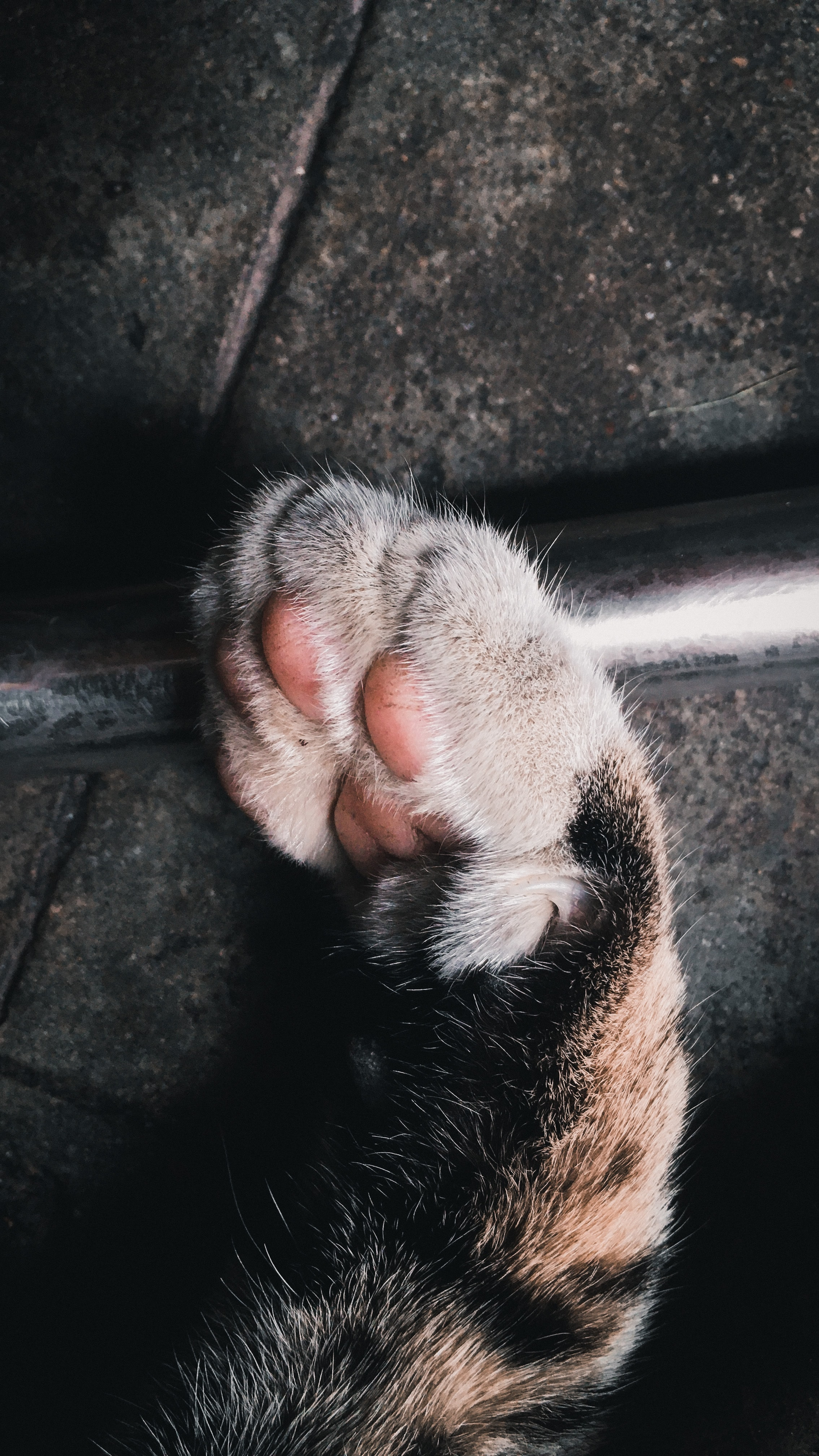 156790 download wallpaper Animals, Paw, Cat, Cushion, Hassock, Nicely, Nice screensavers and pictures for free
