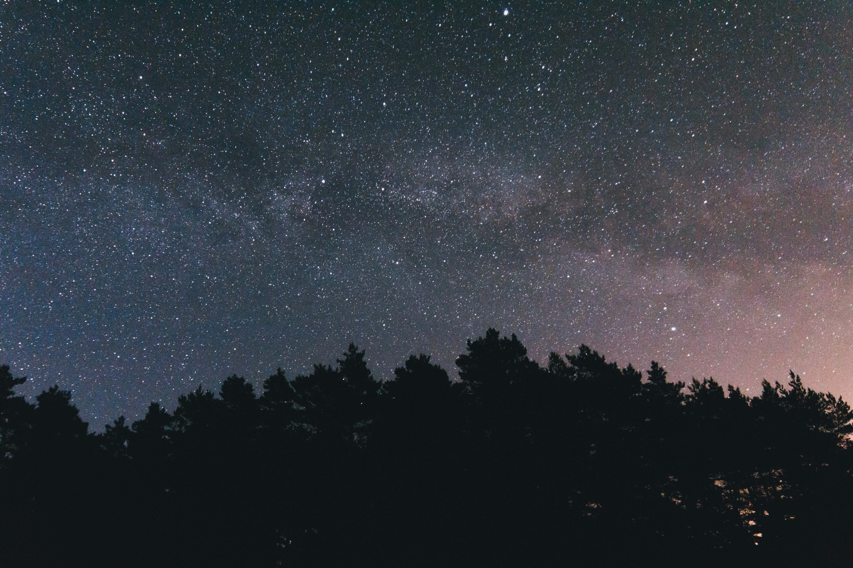79710 обои 1080x2340 на телефон бесплатно, скачать картинки Звездное Небо, Деревья, Небо, Ночь, Темные 1080x2340 на мобильный