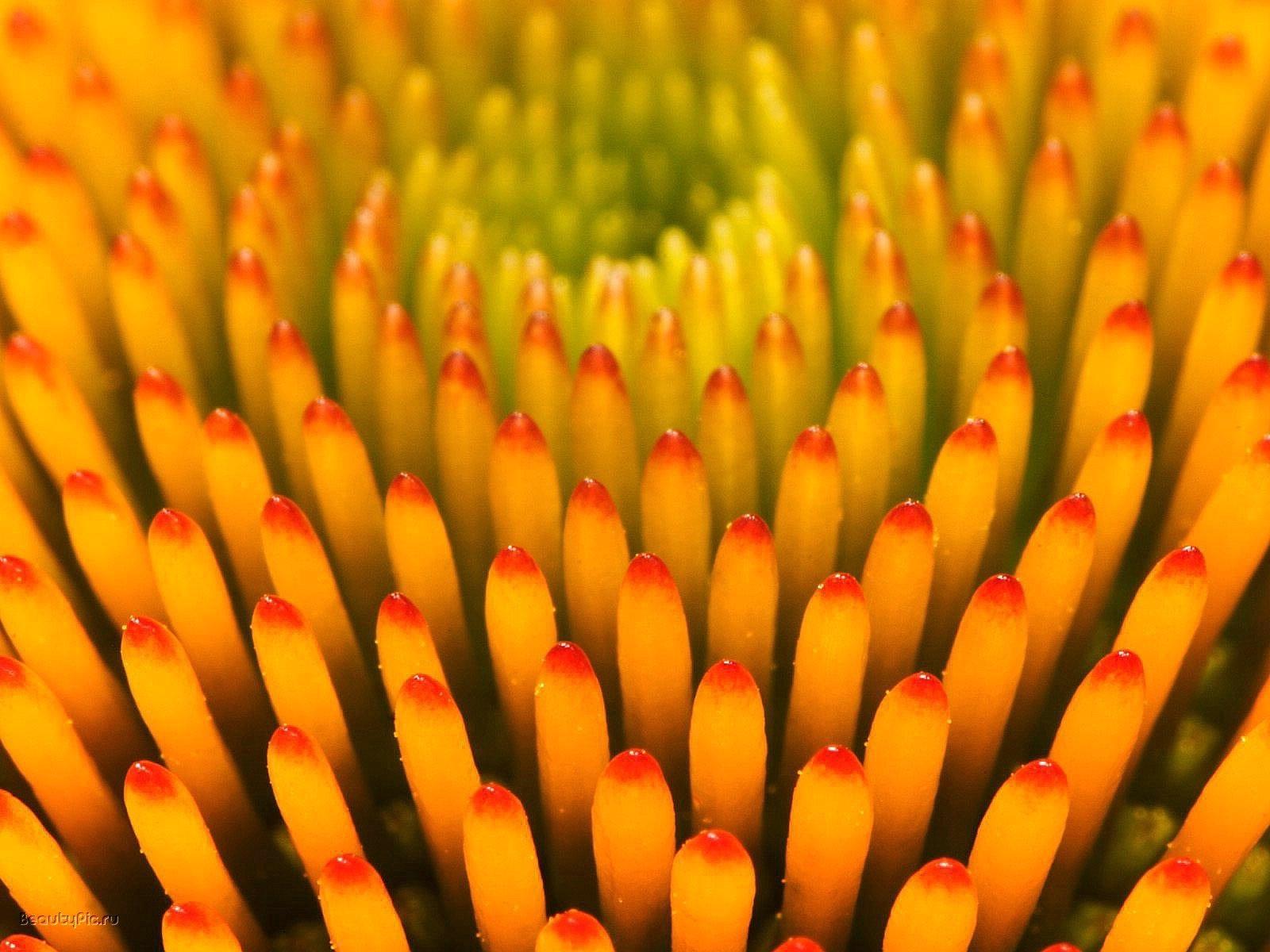 3741 скачать обои Растения, Фон - заставки и картинки бесплатно