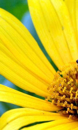 8879 скачать обои Растения, Цветы, Насекомые, Пчелы - заставки и картинки бесплатно