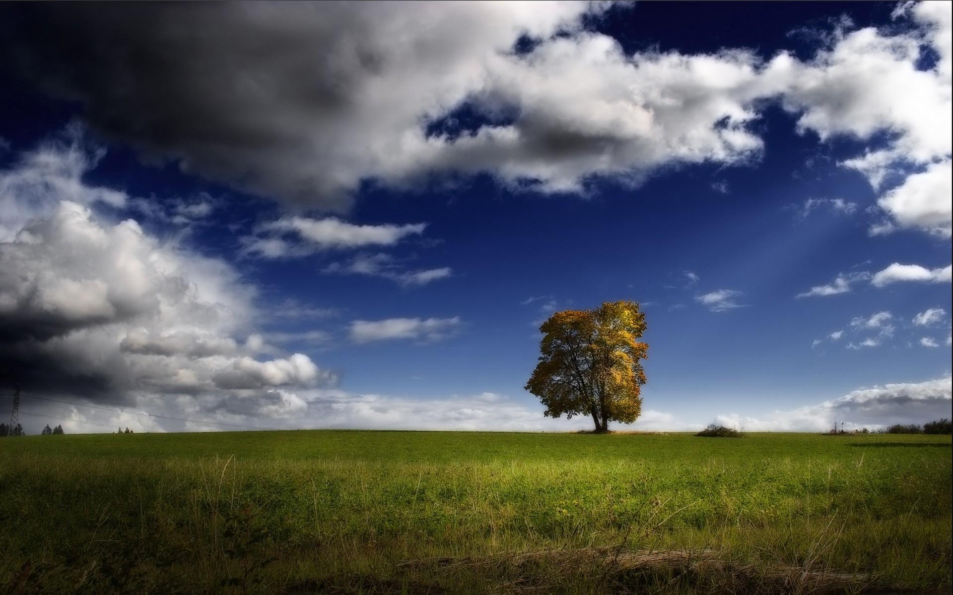 4241 скачать обои Пейзаж, Деревья, Небо - заставки и картинки бесплатно