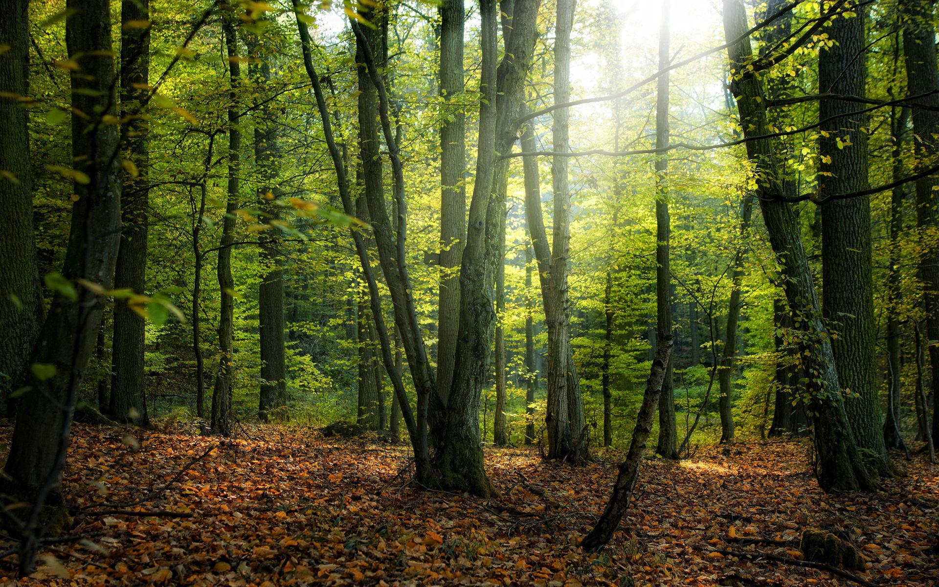 153078 download wallpaper Forest, Nature, Trees, Autumn screensavers and pictures for free