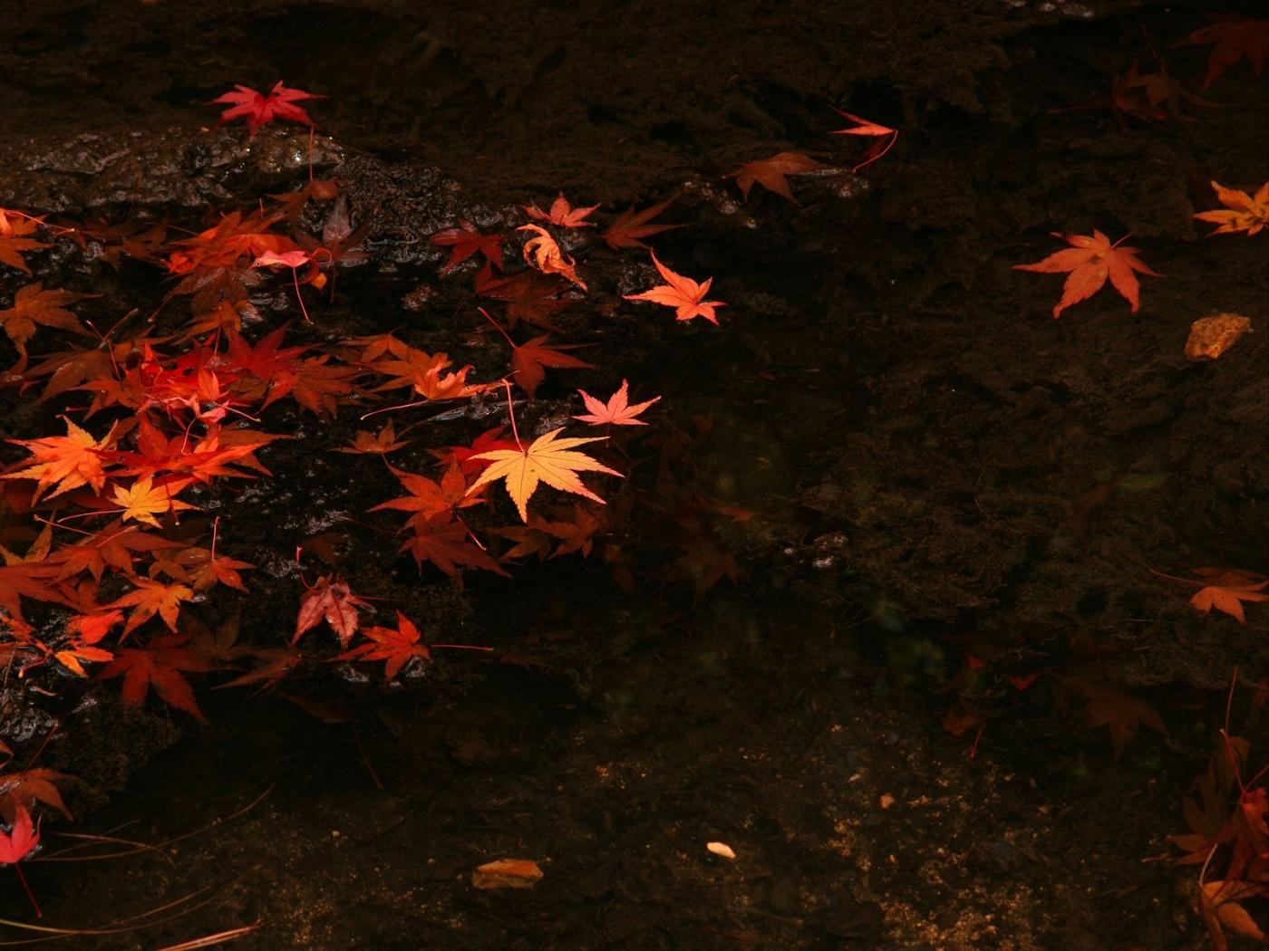 32901 скачать обои Фон, Осень, Листья - заставки и картинки бесплатно