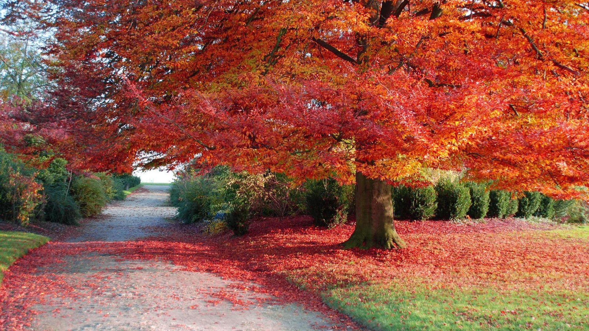 31938 download wallpaper Landscape, Trees, Autumn screensavers and pictures for free