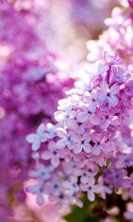 41582 télécharger le fond d'écran Plantes, Fleurs - économiseurs d'écran et images gratuitement
