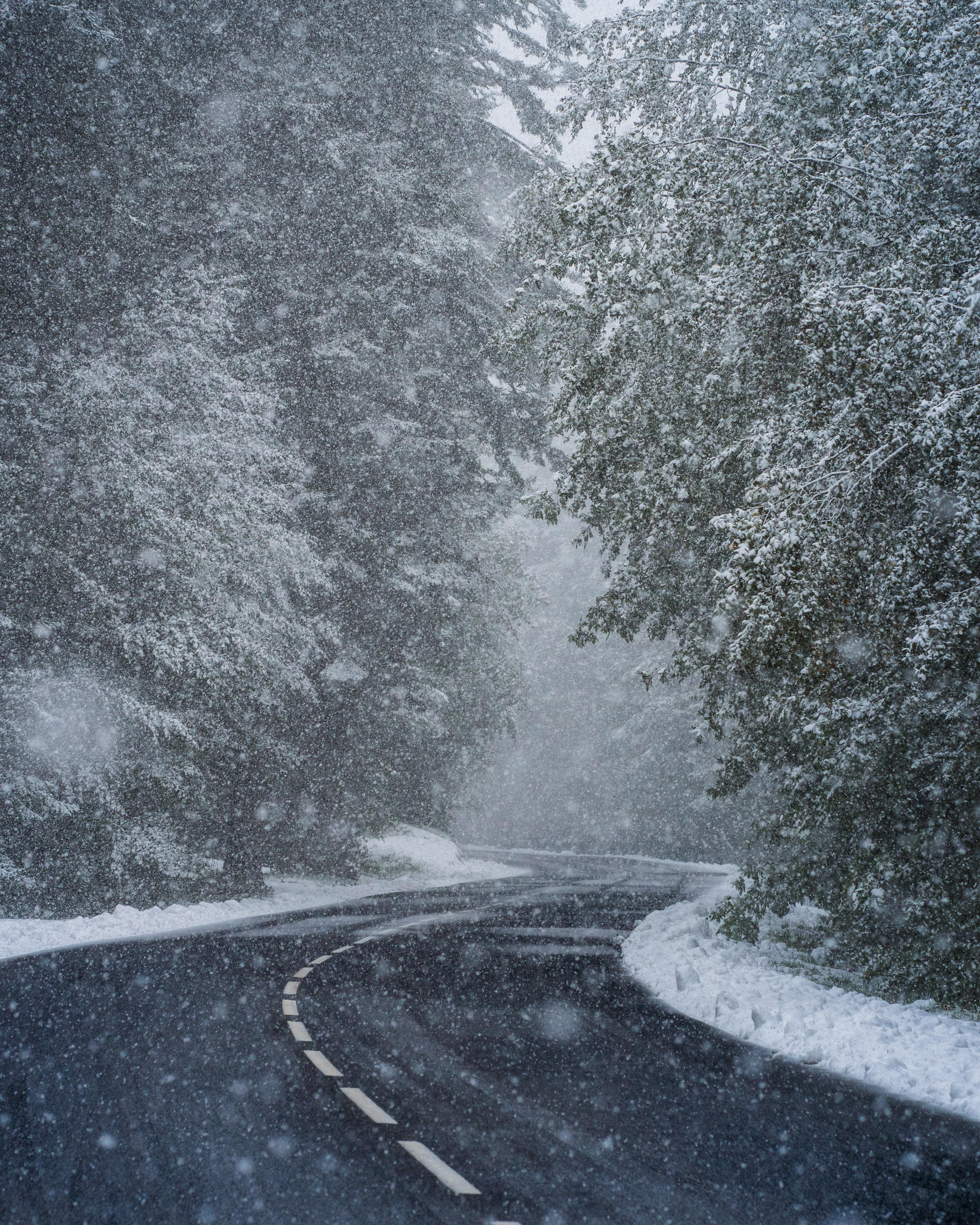 93277 скачать обои Снег, Зима, Природа, Деревья, Дорога, Поворот, Метель - заставки и картинки бесплатно