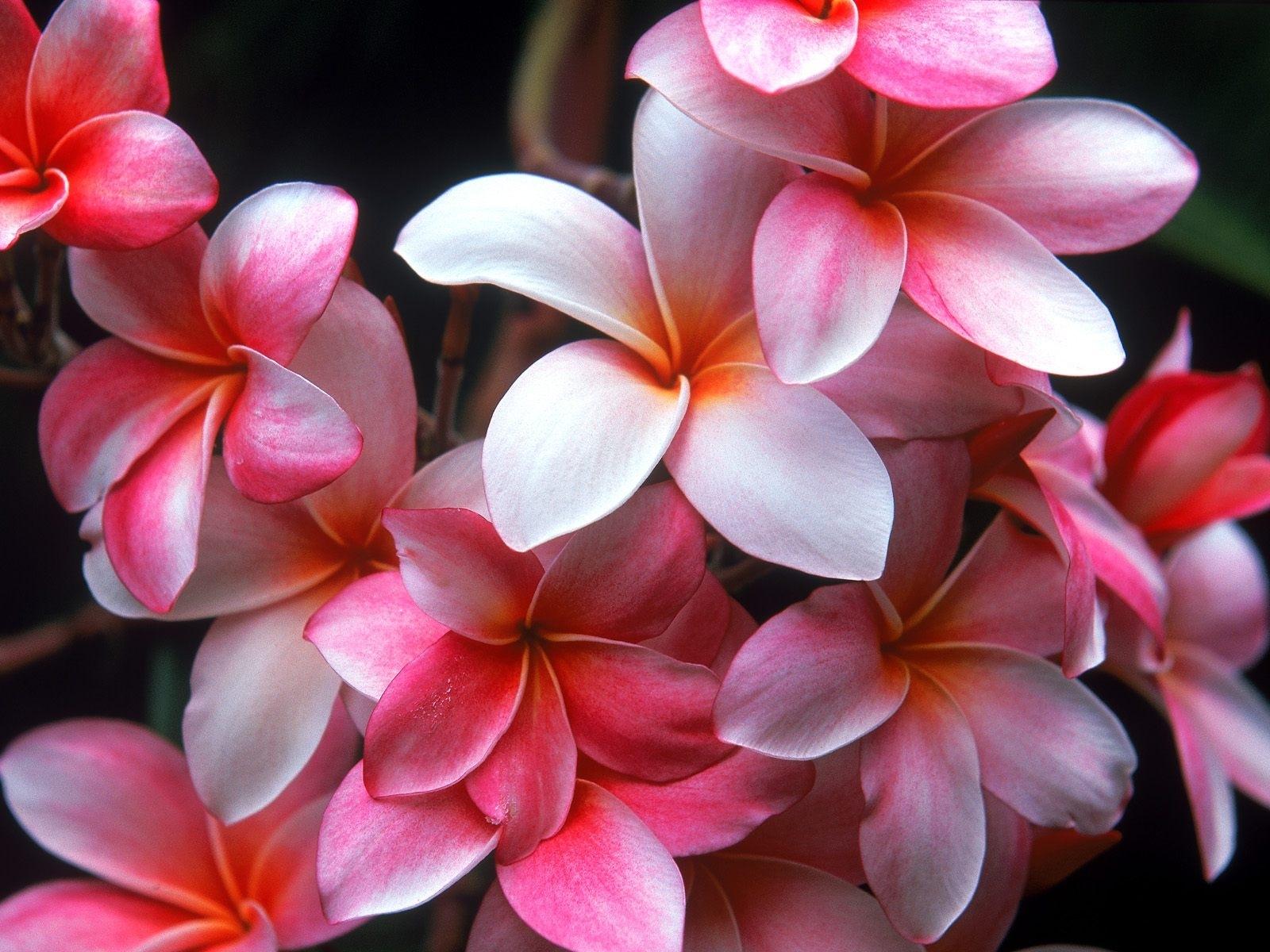 2805 скачать обои Растения, Цветы - заставки и картинки бесплатно