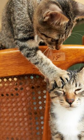 115954 baixar papel de parede Animais, Gatos, Casal, Par, Cadeira, Brincalhão - protetores de tela e imagens gratuitamente
