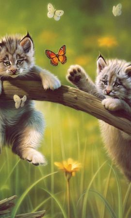 33495 download wallpaper Animals, Pictures, Bobcats screensavers and pictures for free
