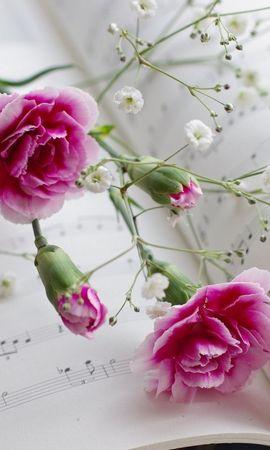 15956 descargar fondo de pantalla Plantas, Flores, Claveles: protectores de pantalla e imágenes gratis