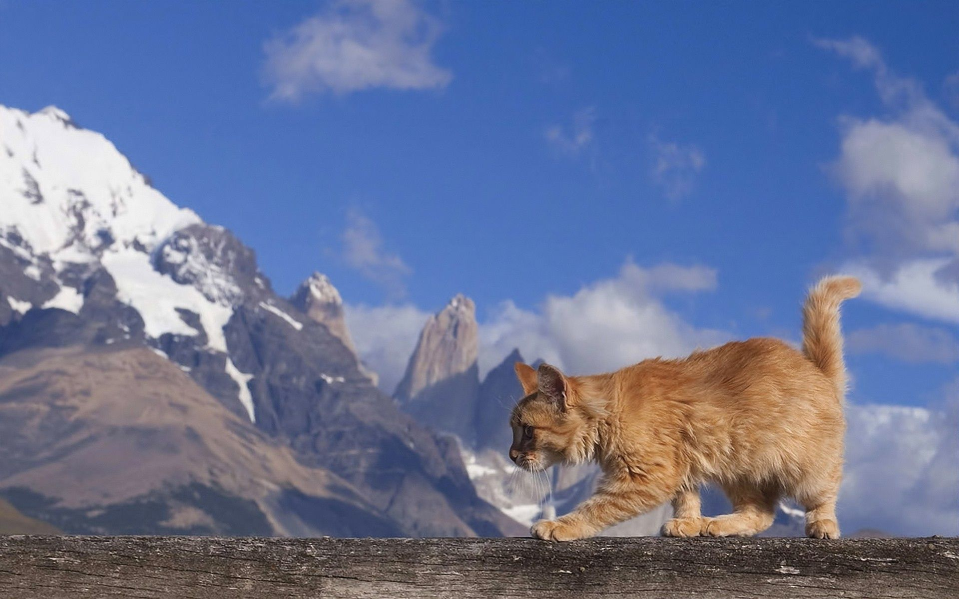 132393 download wallpaper Animals, Cat, Redhead, Stroll screensavers and pictures for free