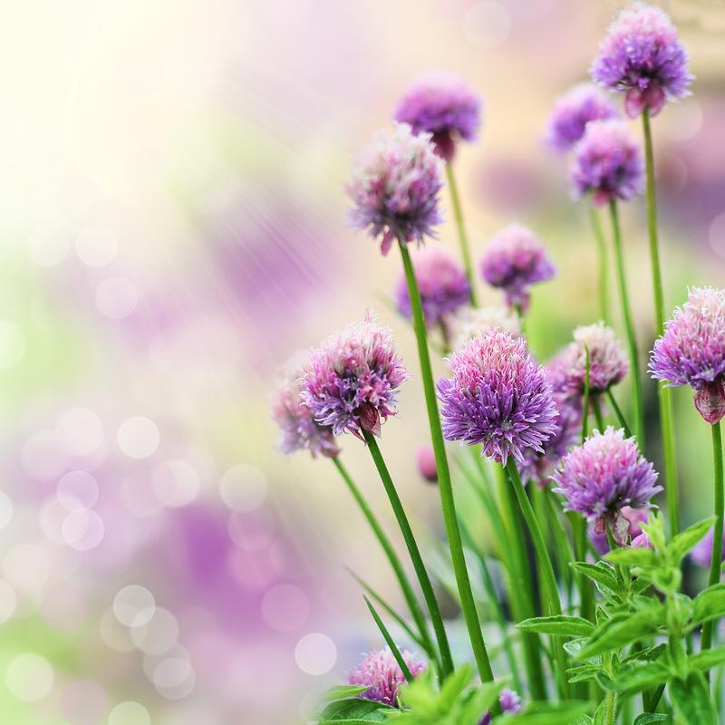 20256 скачать обои Растения, Цветы - заставки и картинки бесплатно