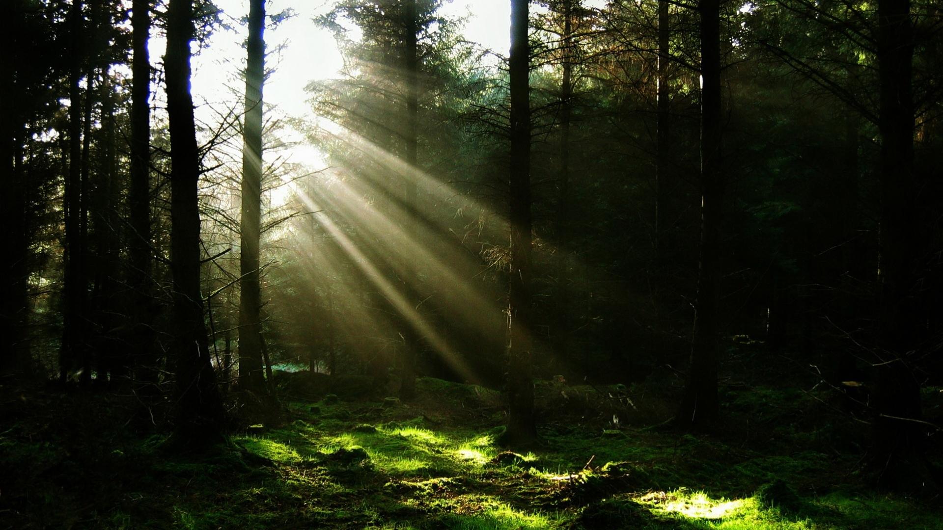 24972 скачать обои Пейзаж, Деревья, Трава, Солнце - заставки и картинки бесплатно