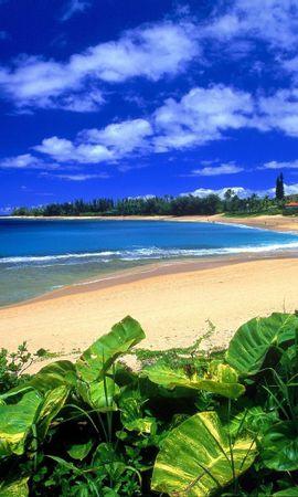 11179 завантажити шпалери Рослини, Пейзаж, Небо, Море, Пляж, Літо - заставки і картинки безкоштовно