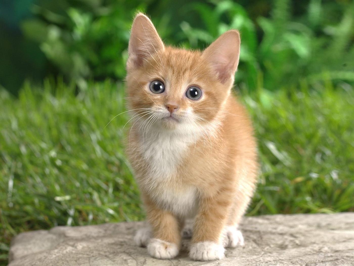 48062 скачать обои Кошки (Коты, Котики), Животные - заставки и картинки бесплатно