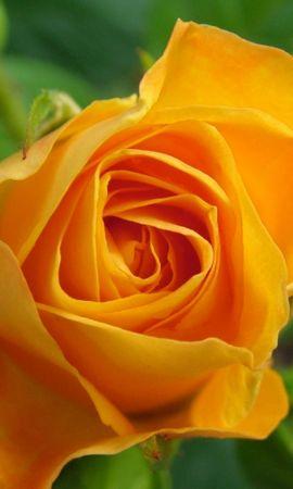 41547 descargar fondo de pantalla Plantas, Flores: protectores de pantalla e imágenes gratis