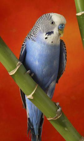 7305 baixar papel de parede Animais, Aves, Papagaios - protetores de tela e imagens gratuitamente