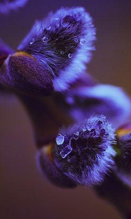 21857 скачать обои Растения, Цветы - заставки и картинки бесплатно
