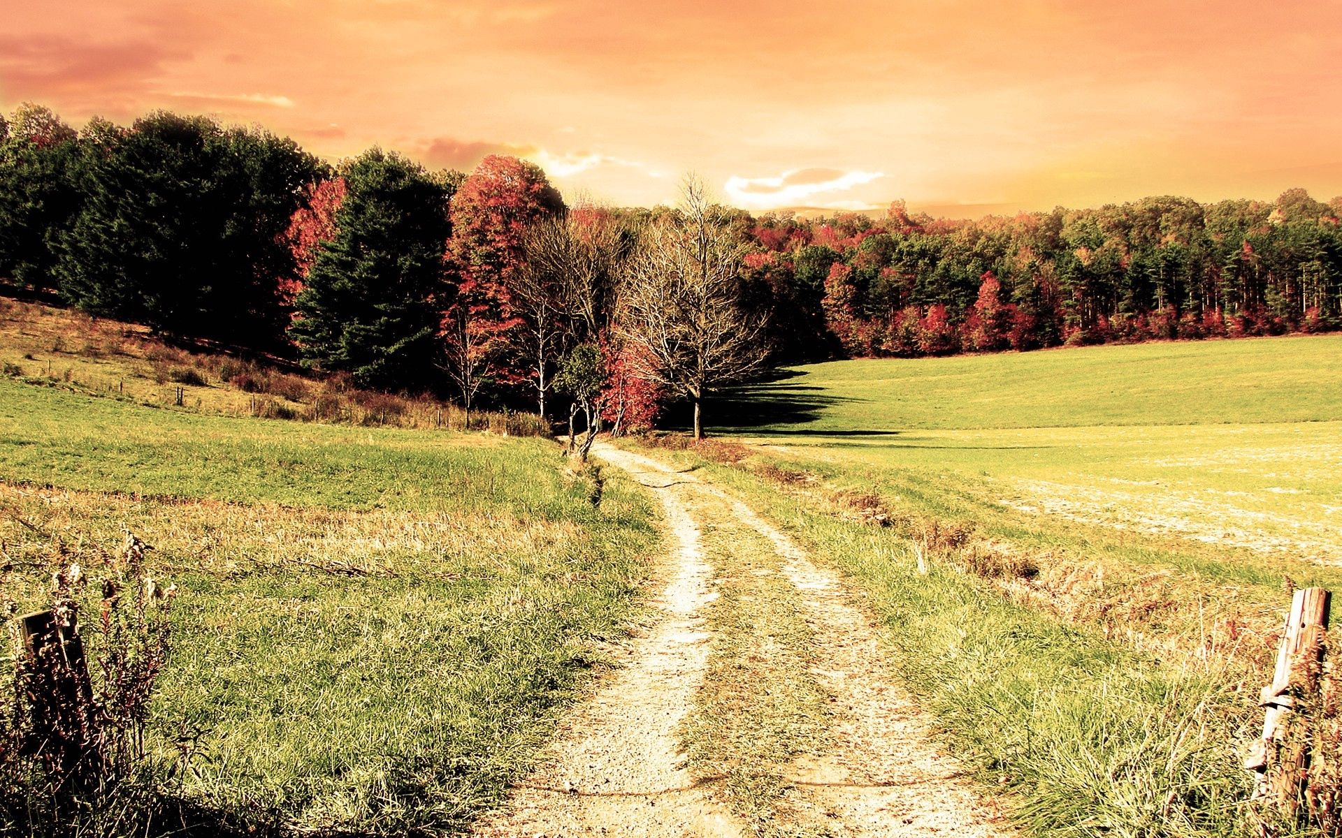 152835 download wallpaper Nature, Road, Forest, Field, Trees, Autumn, Colors, Color screensavers and pictures for free