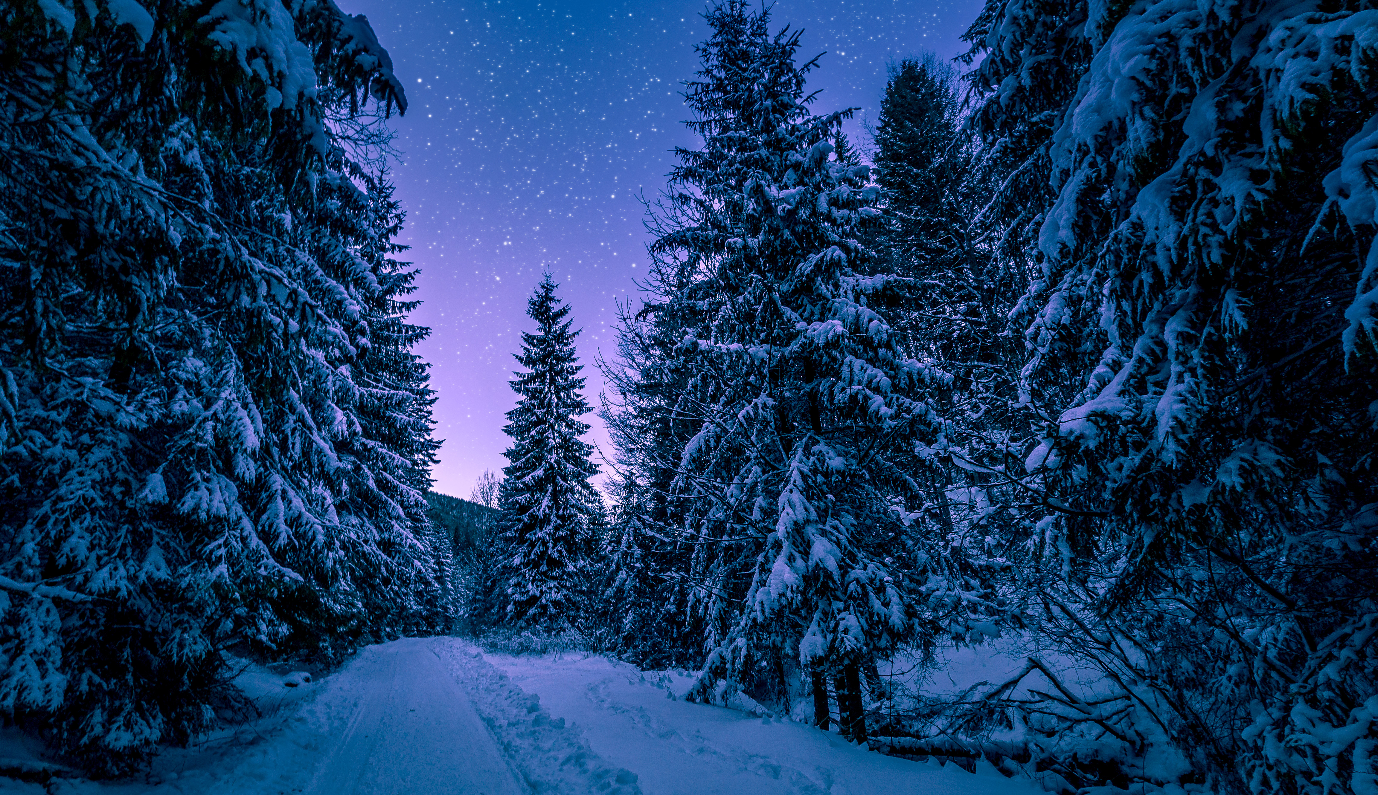 133696 download wallpaper Starry Sky, Winter, Nature, Snow, Road, Forest screensavers and pictures for free