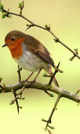 3149 descargar fondo de pantalla Animales, Birds: protectores de pantalla e imágenes gratis