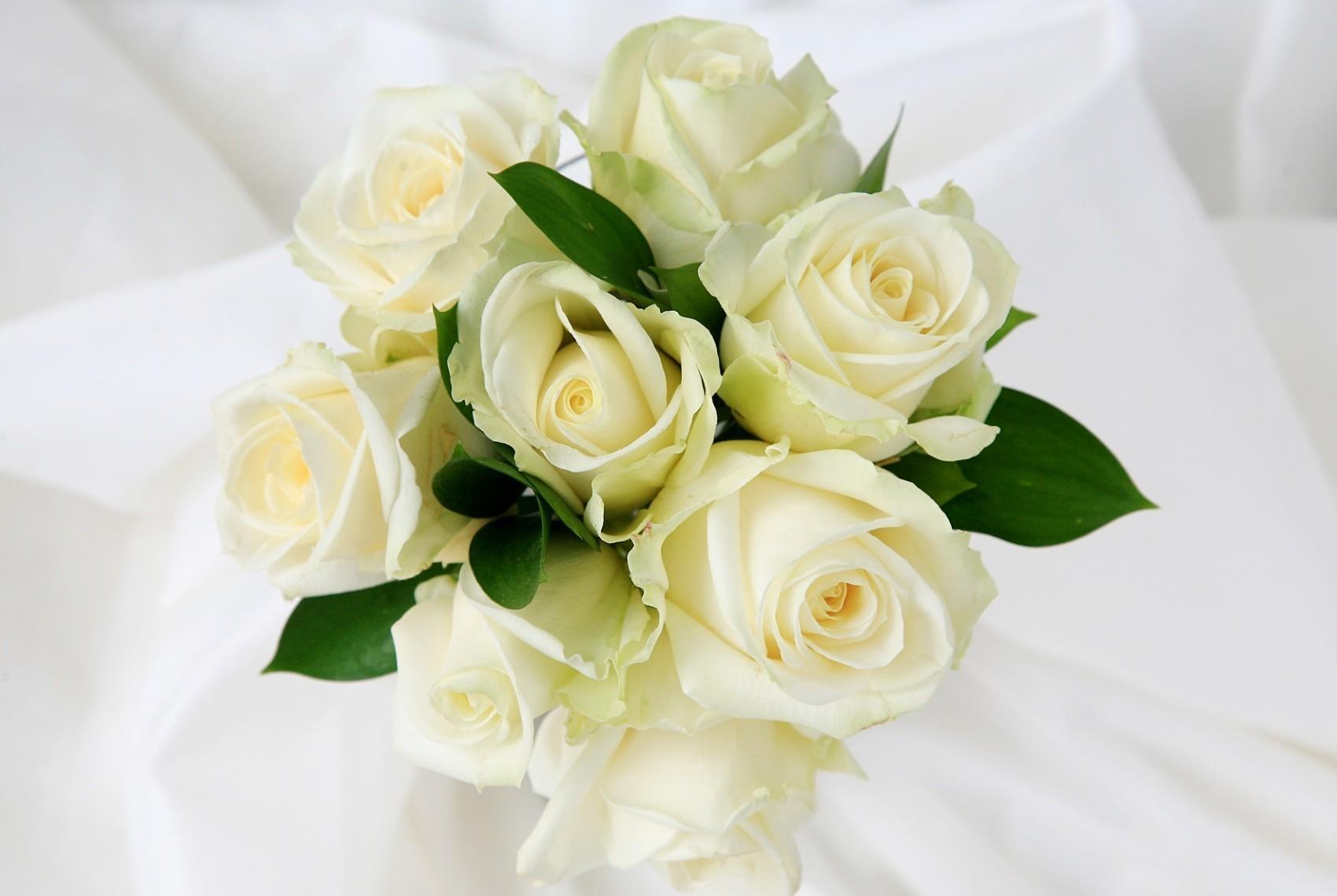 132067 скачать Белые обои на телефон бесплатно, Цветы, Розы, Букет, Нежность Белые картинки и заставки на мобильный