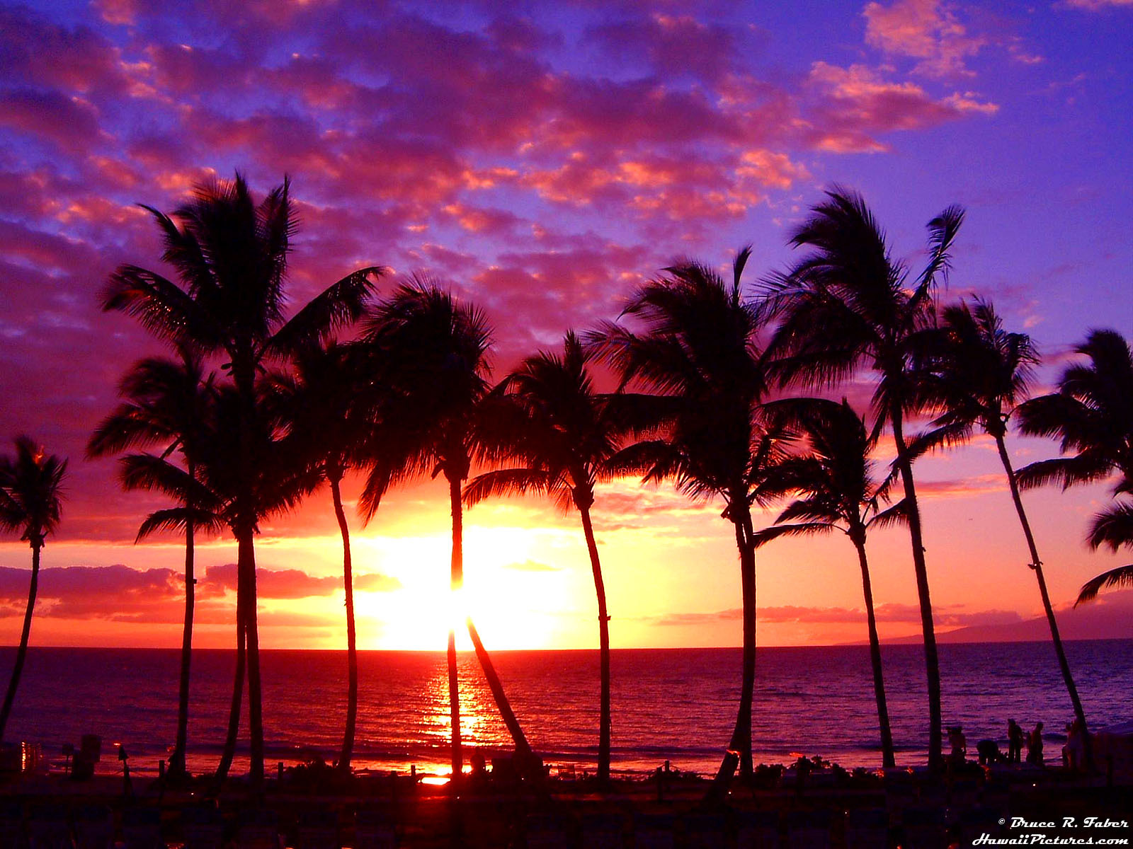 12581 скачать обои Пейзаж, Закат, Солнце, Пальмы - заставки и картинки бесплатно