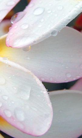 25671 скачать обои Растения, Цветы, Капли - заставки и картинки бесплатно
