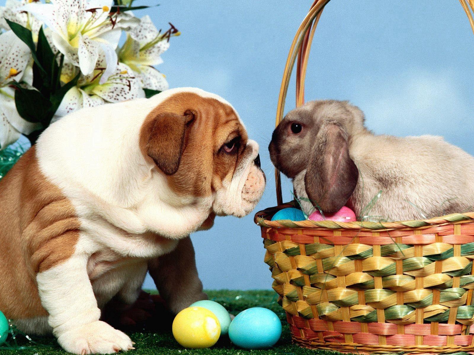 102771 descargar fondo de pantalla Animales, Perro, Conejo, Cesta, Canasta, Pascua, Huevos: protectores de pantalla e imágenes gratis