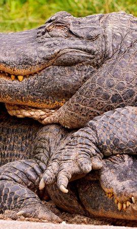 107379 baixar papel de parede Animais, Casal, Par, Terra, Crocodiles - protetores de tela e imagens gratuitamente