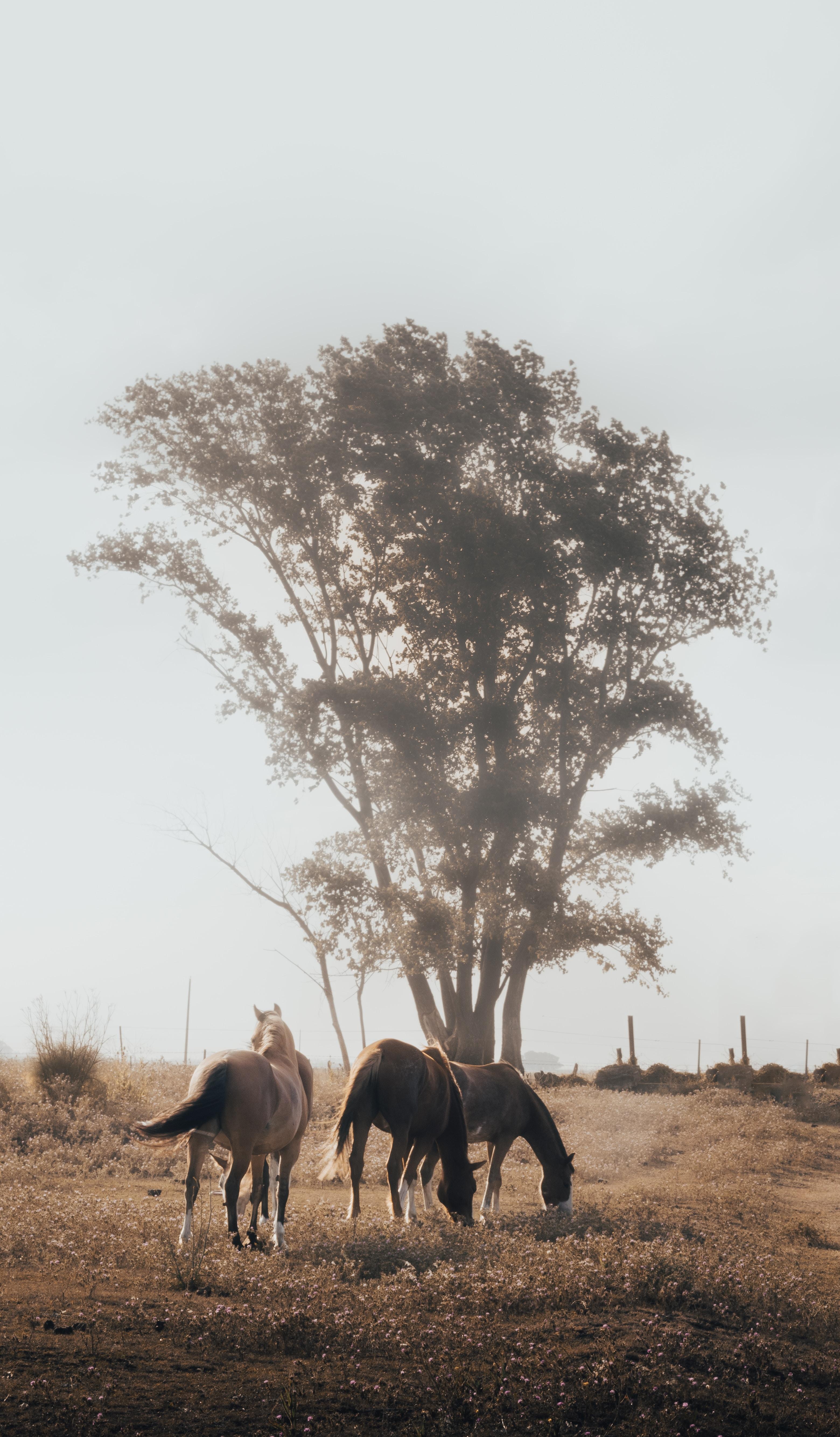 119729 Hintergrundbild 1080x1920 kostenlos auf deinem Handy, lade Bilder Tiere, Natur, Pferde, Holz, Baum, Weide 1080x1920 auf dein Handy herunter