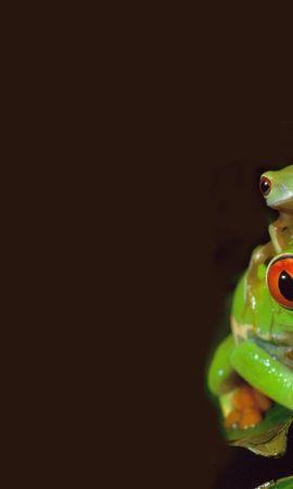 40266 baixar papel de parede Animais, Frogs - protetores de tela e imagens gratuitamente