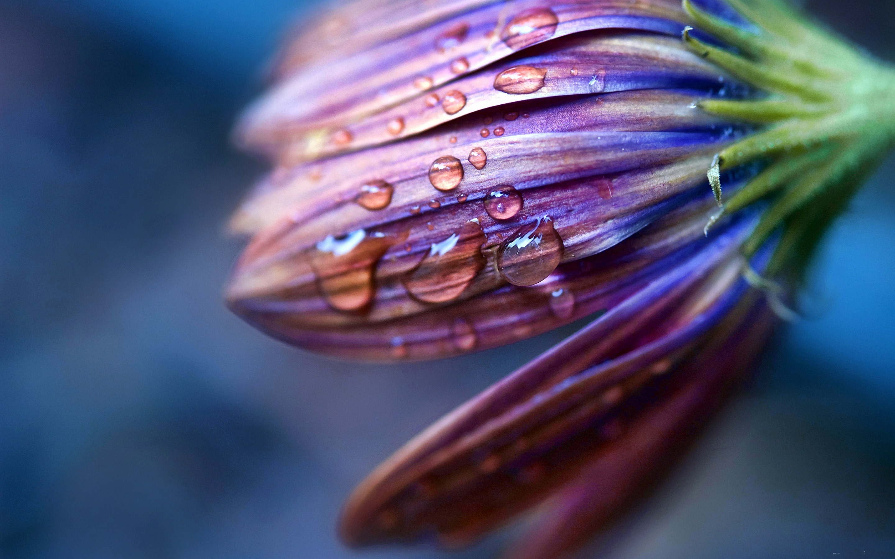 124609 Screensavers and Wallpapers Flower for phone. Download Drops, Flower, Macro, Spray, Dew pictures for free