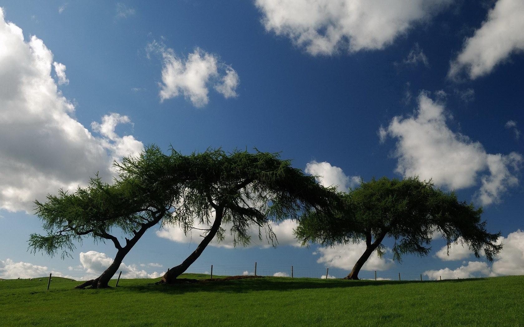 8919 скачать обои Пейзаж, Деревья, Небо - заставки и картинки бесплатно