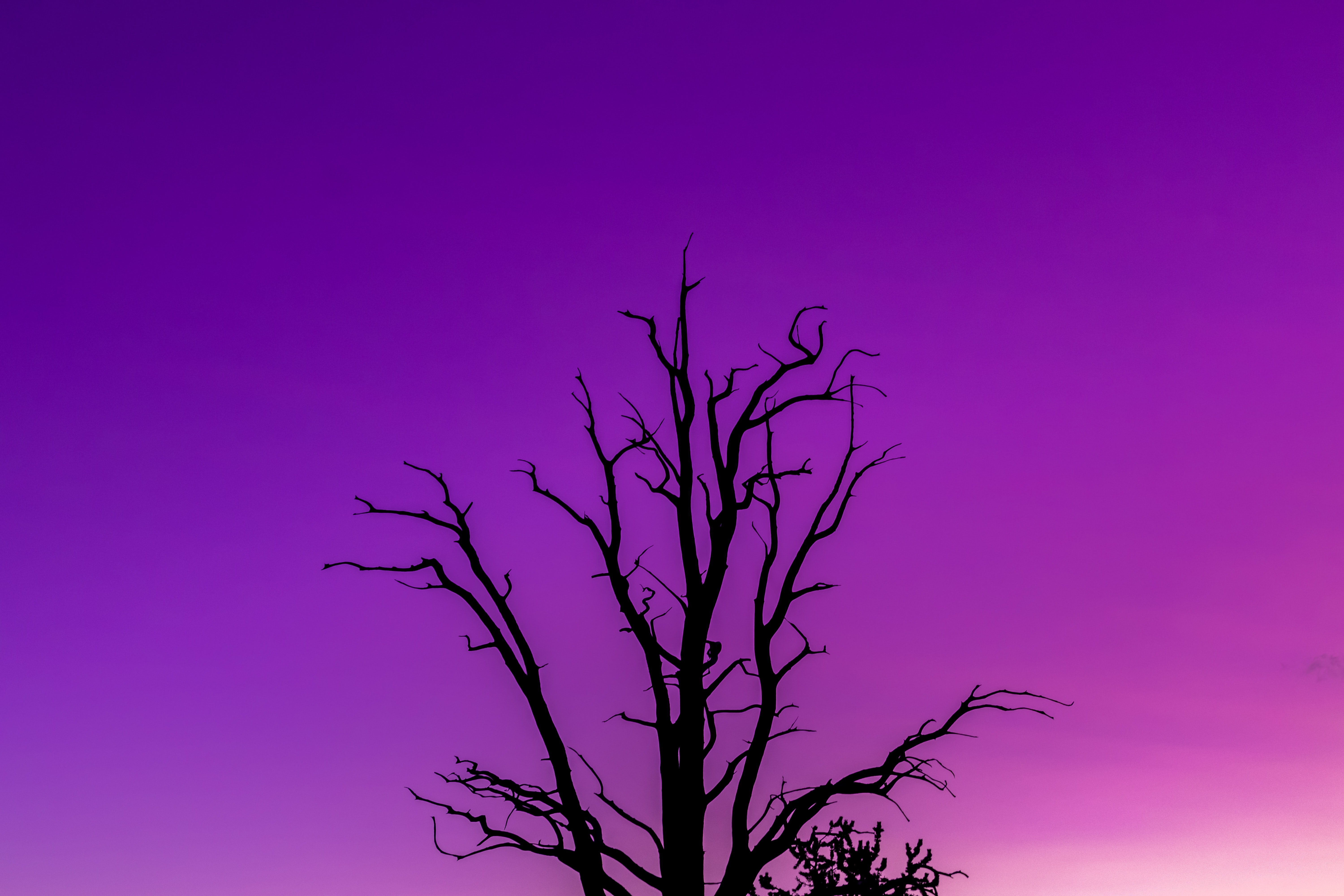 129002 Screensavers and Wallpapers Purple for phone. Download Nature, Sky, Twilight, Violet, Wood, Tree, Minimalism, Dusk, Purple pictures for free