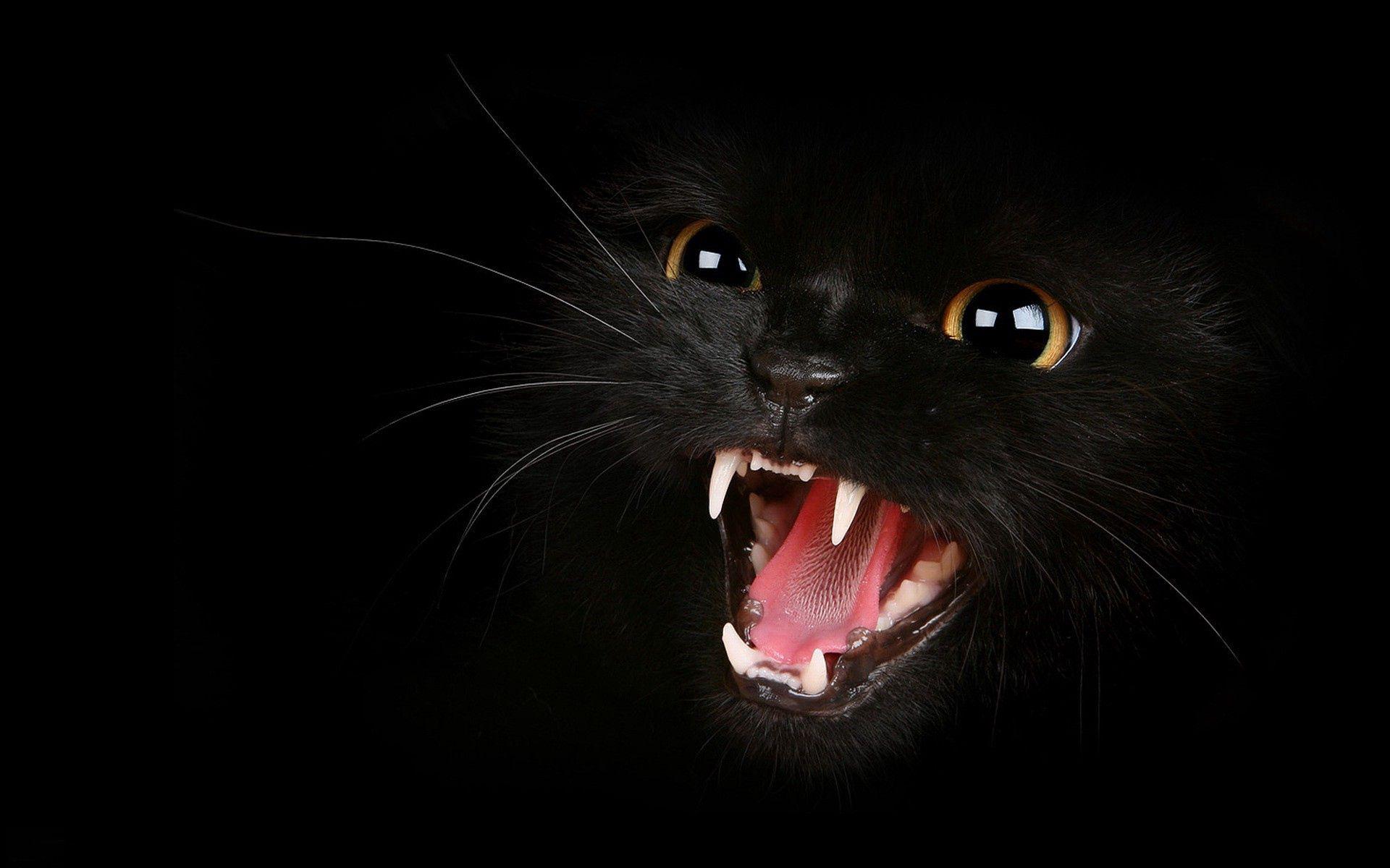 153596 скачать обои Черный, Оскал, Животные, Агрессия, Глаза, Котенок, Мяу - заставки и картинки бесплатно