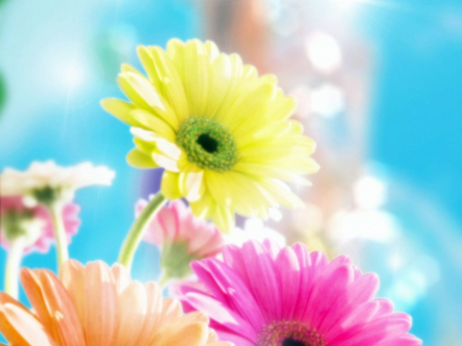 6477 скачать обои Растения, Цветы - заставки и картинки бесплатно