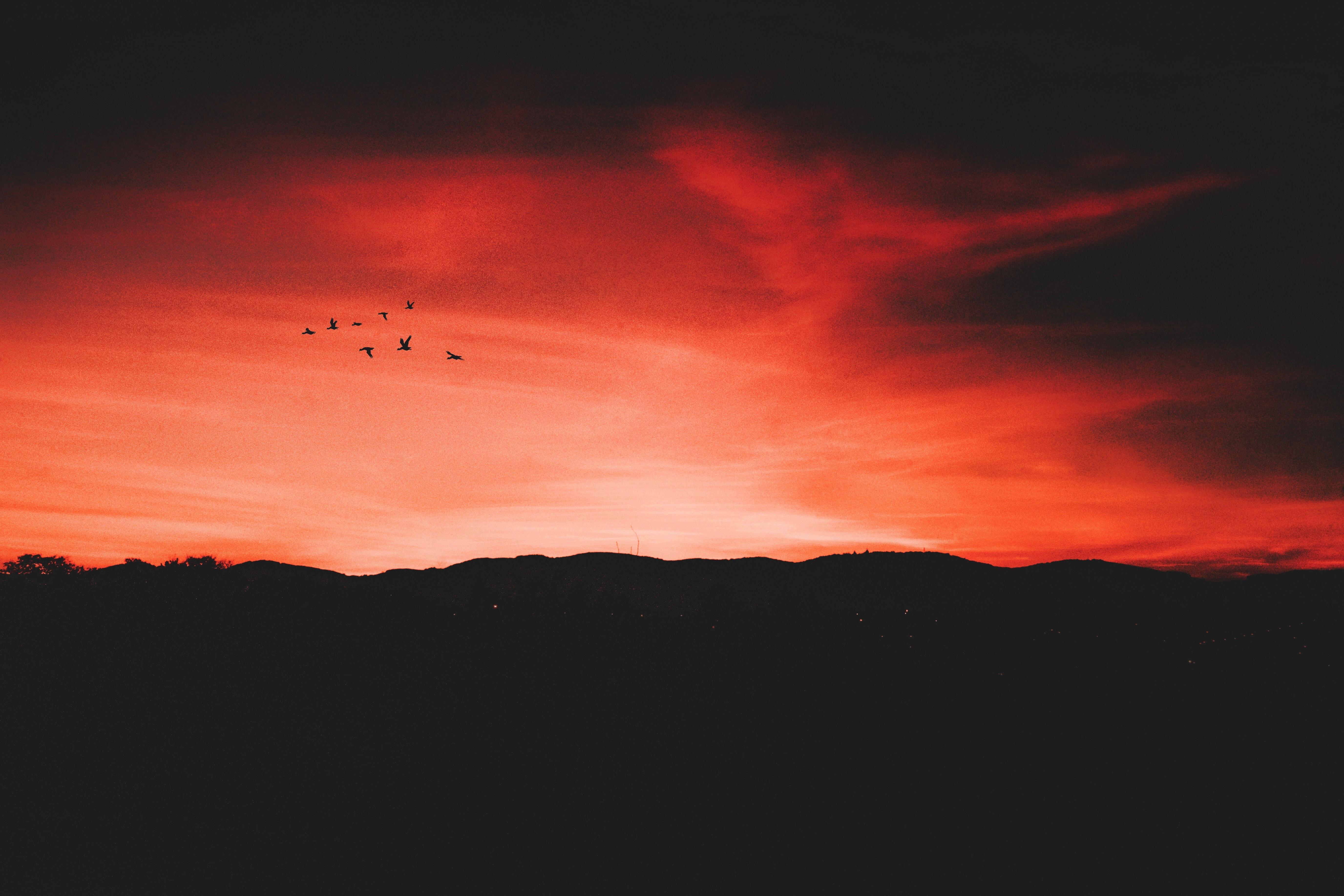 112150 Hintergrundbild herunterladen Vögel, Sky, Übernachtung, Horizont, Dunkel - Bildschirmschoner und Bilder kostenlos