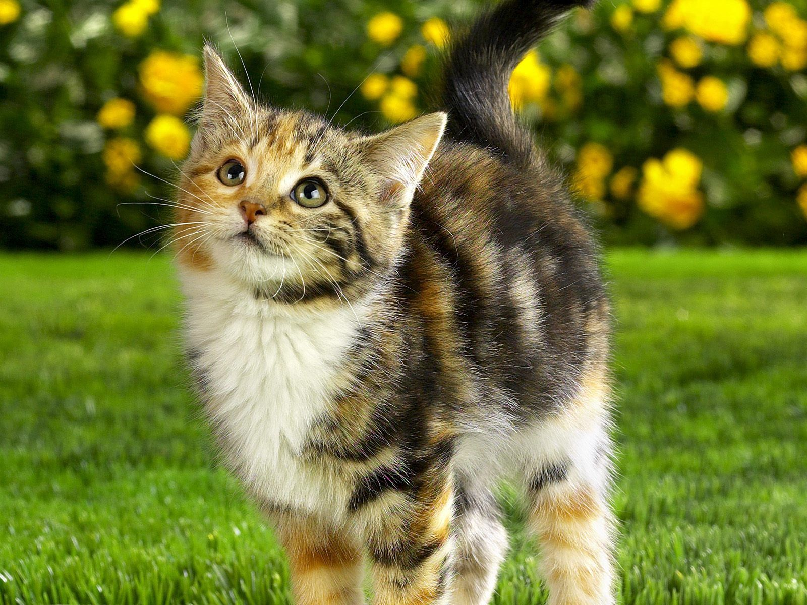 59613 download wallpaper Animals, Kitty, Kitten, Striped, Grass, Muzzle, Nice, Sweetheart screensavers and pictures for free