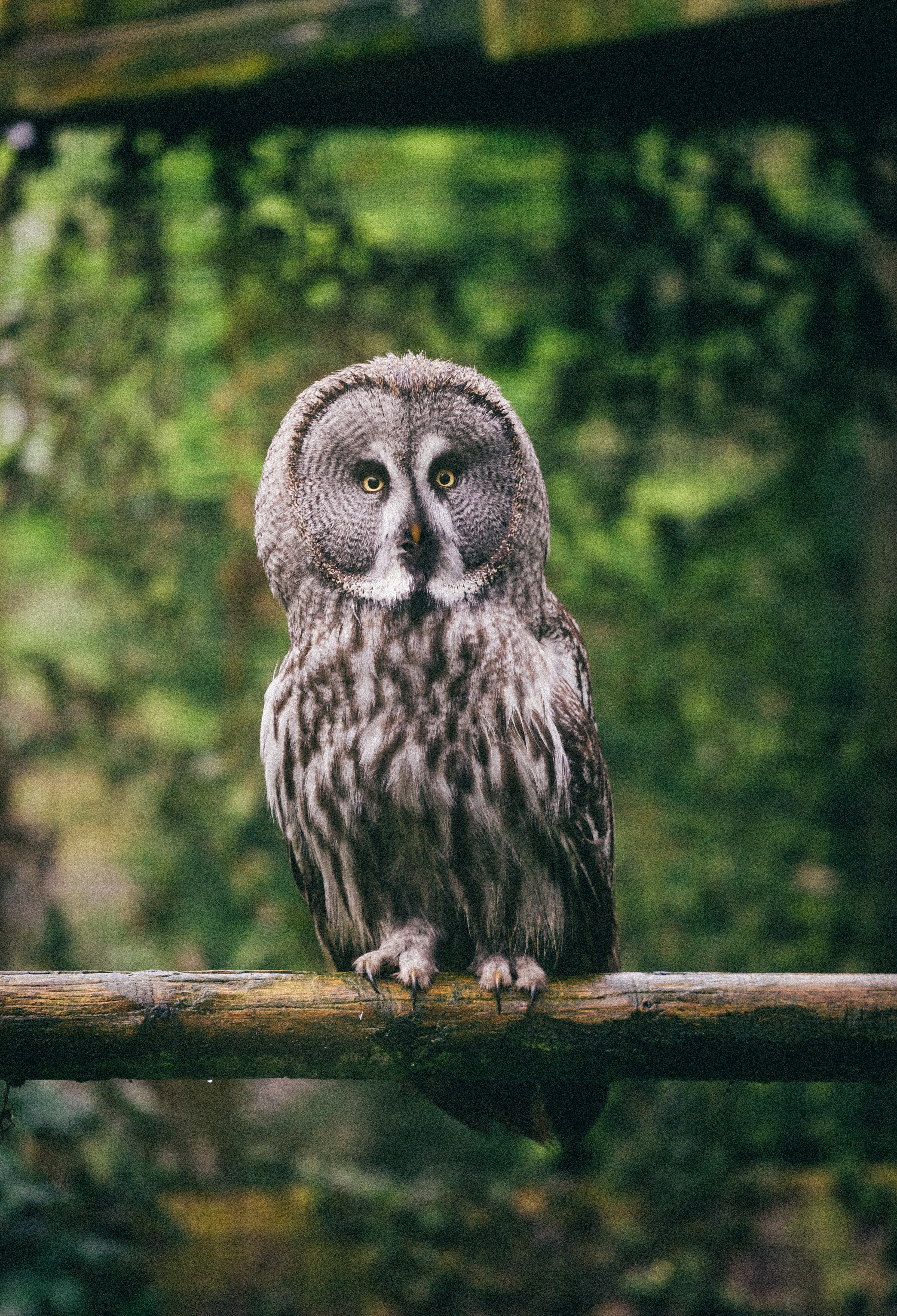 147404 download wallpaper Animals, Owl, Eagle Owl, Bird, Predator, Sight, Opinion screensavers and pictures for free