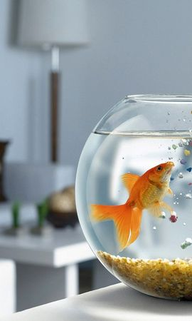 5990 download wallpaper Funny, Animals, Aquariums, Fishes screensavers and pictures for free
