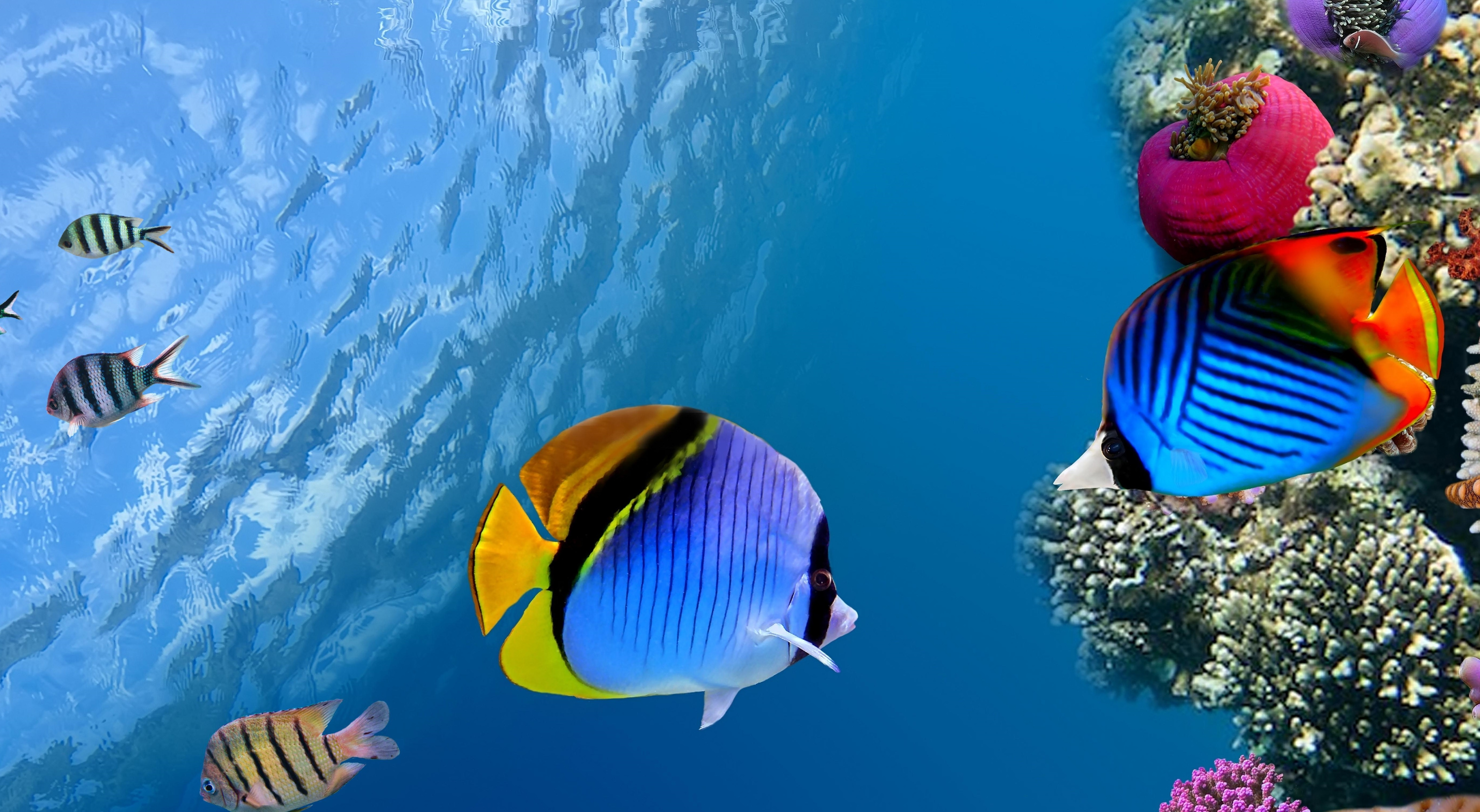 152799 download wallpaper Animals, Under Water, Underwater, Coral, Fish, Sea, Ocean screensavers and pictures for free