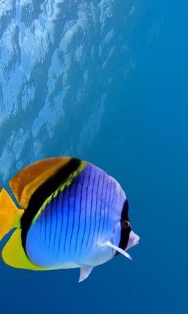 152799壁紙のダウンロード動物, 水中, コーラル, 珊瑚, 魚, 海, 海洋, 大洋-スクリーンセーバーと写真を無料で