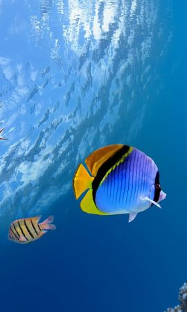 21022 download wallpaper Animals, Sea, Fishes screensavers and pictures for free