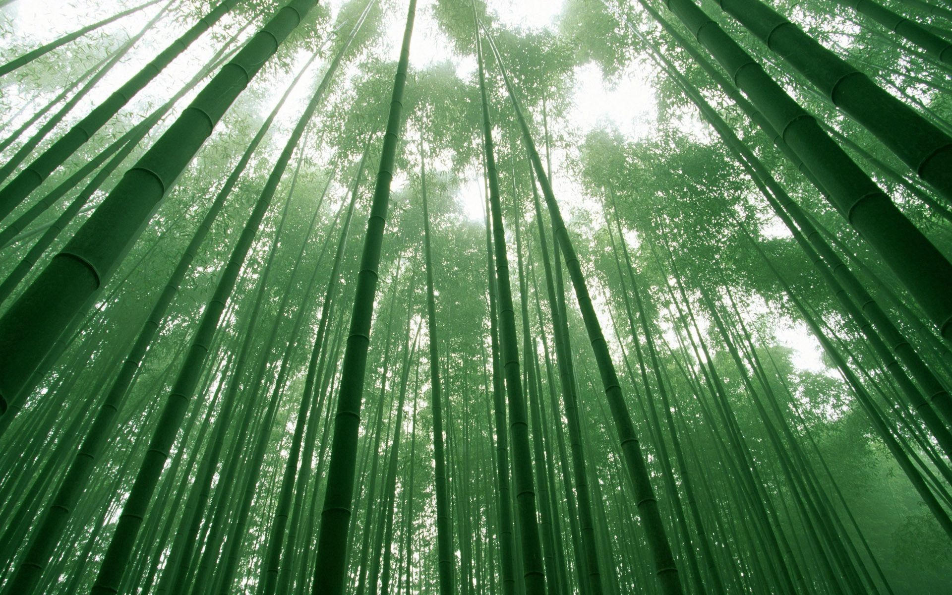 70535 download wallpaper Nature, Bamboo, Stems, Sky, Crowns, Crown screensavers and pictures for free