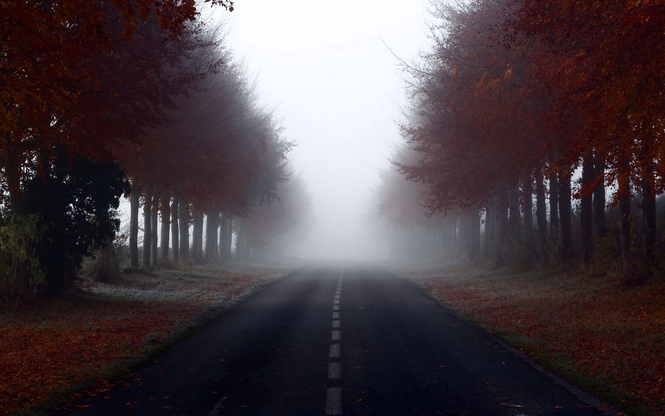 125189 Screensavers and Wallpapers Markup for phone. Download Nature, Trees, Road, Markup, Fog pictures for free
